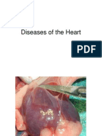 13 Diseases of the Heart