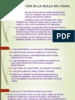 Selección de la seilla del frijol.pptx