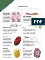 Tipos de Células y formas