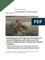 Falkland Wolf