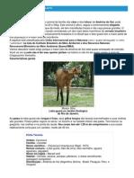 Lobo-guará - Ficha do Animal - Como funciona o lobo-guará.pdf