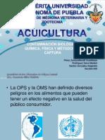 Contaminación & Métodos de Captura de Peces