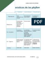 Caracteristicas de Los Phyllum