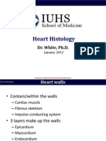 B3 Histo Heart White