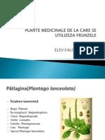 Plante Medicinale de La Care Se Utilizeza Frunzele