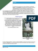 Harpia - Ficha da Ave - Como funciona a harpia.pdf