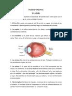 el ojo