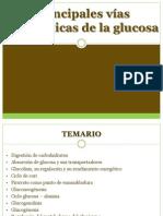 Principales Vías Metabólicas de La Glucosa