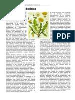 2013 #Morfofisiologiavegetal Botanica