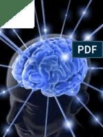 EEG Signal Processing