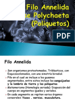 Filo Annelida Clase Poliquetos (1)