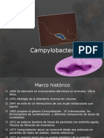 Camphylobacter