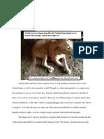 animal abuse final draft