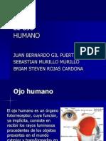 Anatomia Del Ojo