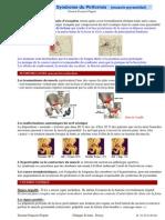 8 5 Syndrome Du Pyramidal 2 Pg