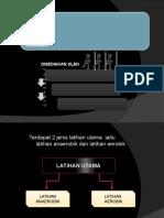 anaerobik & aerobik