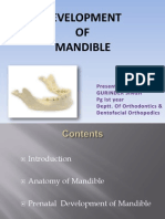 Fourth Seminar Mandible