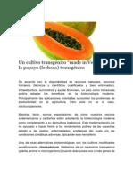 Un cultivo transgénico, made in Venezuela.pdf