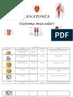 Musculos de La Cabeza