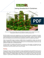 Guide To Growing Strawberries In Containers