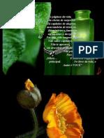 Flores e Pensamentos