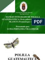 Expo Polilla y Gusano Blanco