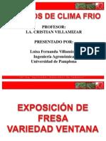 Exposicion de Fresa Ventana