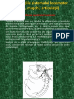 12.Dezvoltarea Aparatului Locomotor.dezvoltarea Scheletului,Craniului,Scheletului Axial,Membre
