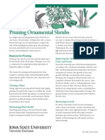 Ornamental Shrub Pruning Guide