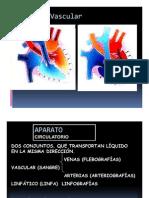 Radiologia Vascular - Angiografias