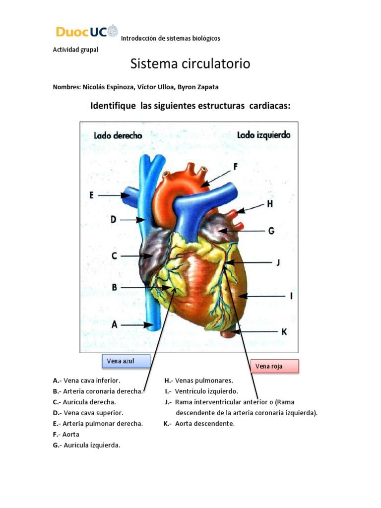 Actividad Grupal Sistema Circulatorio Terminado