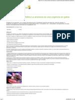 Anorexia en Gato Obeso Lipidosis Hepatica