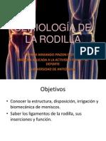 Rodilla - Deiber - SENA
