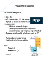 Metabolismo de Nucleotidos Diapositivas 2009