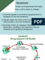 apoptosis and molecular evidence