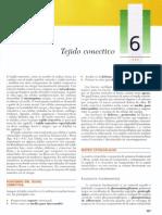 Cap 06 - Tejido Conectivo
