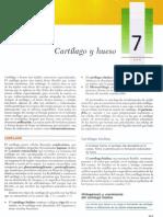 Cap 07 - Cartílago y hueso