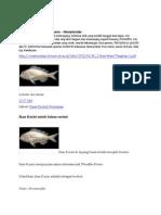Ikan Kurisi Dan Ikan Nilem