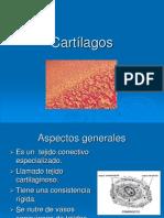 Cartílagos2