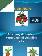 tumbuhanduniasainsteknologitahun1-130425233353-phpapp01