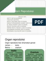 Sistem Reproduksi ikan ikan ikan ikan.pptx