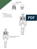 Guía de Esttudio Del Cuerpo Humano