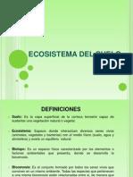 Ecosistema Del Suelo