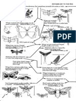 Field Guide To The Insects America North of Mexico.pdf