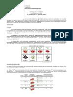 SISTEMA ABO.pdf