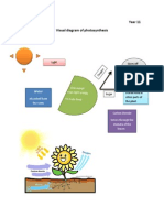 Visual Diagram of Photosynthesis
