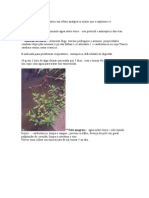 Formula Quimica Das Plantas