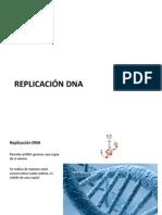 ReplicaDNA Interfase Mito