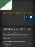 Sistema Muscular Embriologia 1