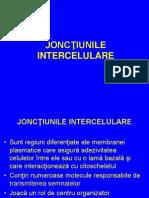 Curs Nr. 4 B Jonctiuni Intercelulare